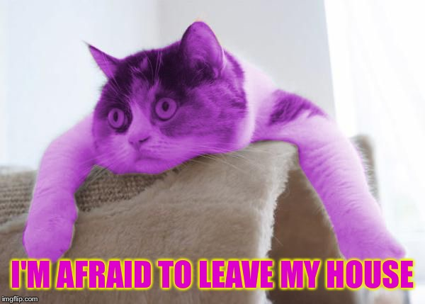 RayCat Stare | I'M AFRAID TO LEAVE MY HOUSE | image tagged in raycat stare | made w/ Imgflip meme maker