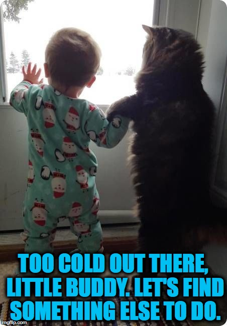 Maine Coon Cat Looking Out For His Favourite Human | TOO COLD OUT THERE, LITTLE BUDDY. LET'S FIND SOMETHING ELSE TO DO. | image tagged in buddies | made w/ Imgflip meme maker