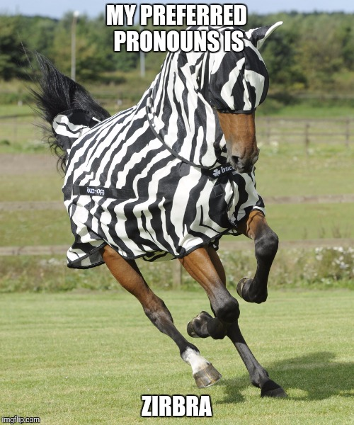 Horse In Zebra Suit | MY PREFERRED PRONOUNS IS ZIRBRA | image tagged in horse in zebra suit | made w/ Imgflip meme maker