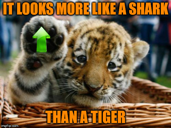 IT LOOKS MORE LIKE A SHARK THAN A TIGER | made w/ Imgflip meme maker