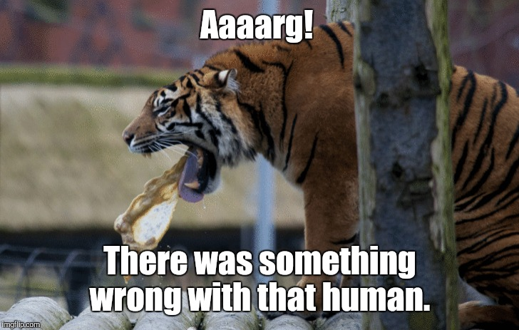 In recognition of Tiger Week. July 24th-31st. A TigerLegend1046 event.  | Aaaarg! There was something wrong with that human. | image tagged in funny meme,tiger week,vomit | made w/ Imgflip meme maker
