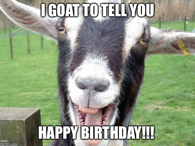 Funny Goat   I GOAT TO TELL YOU HAPPY BIRTHDAY!!!   image tagged