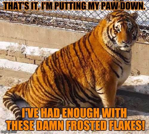 Looks like someone's had a few thousand too many Frosted Flakes . . . Tiger Week, a TigerLegend1046 event | THAT'S IT, I'M PUTTING MY PAW DOWN. I'VE HAD ENOUGH WITH THESE DAMN FROSTED FLAKES! | image tagged in tiger week,tigerlegend1046,frosted flakes,fat,eaten too many,animals | made w/ Imgflip meme maker