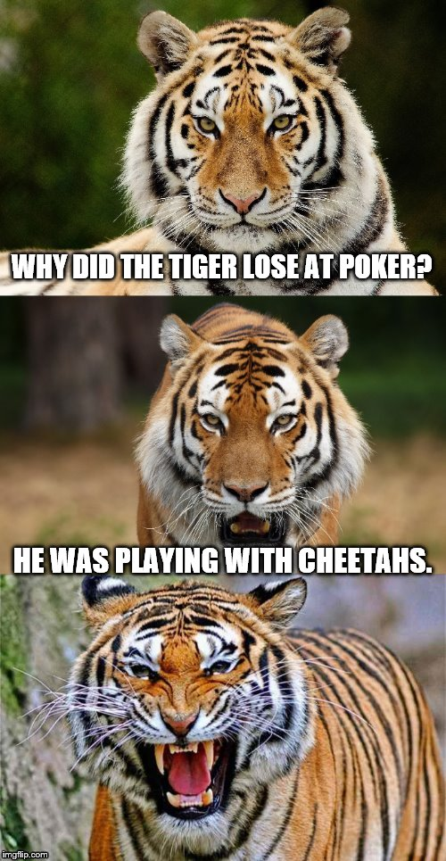 WHY DID THE TIGER LOSE AT POKER? HE WAS PLAYING WITH CHEETAHS. | made w/ Imgflip meme maker