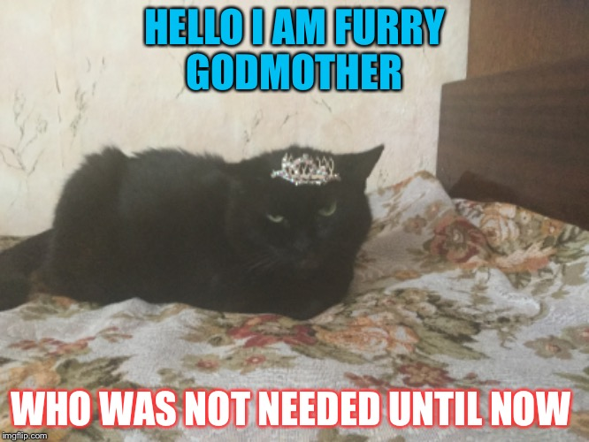 Cutie cat  | HELLO I AM FURRY GODMOTHER WHO WAS NOT NEEDED UNTIL NOW | image tagged in cats,fairy godmother | made w/ Imgflip meme maker