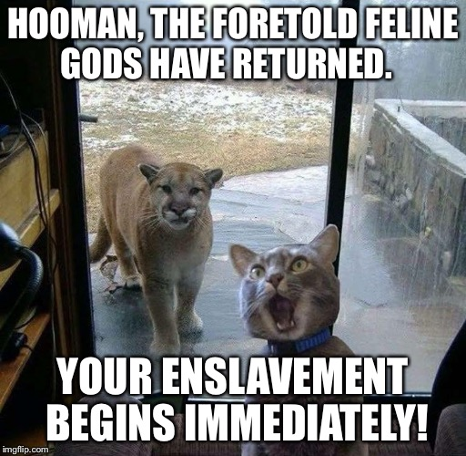 HOOMAN, THE FORETOLD FELINE GODS HAVE RETURNED. YOUR ENSLAVEMENT BEGINS IMMEDIATELY! | image tagged in cat | made w/ Imgflip meme maker