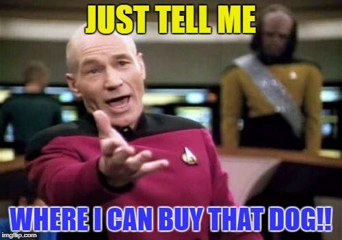 Picard Wtf Meme | JUST TELL ME WHERE I CAN BUY THAT DOG!! | image tagged in memes,picard wtf | made w/ Imgflip meme maker