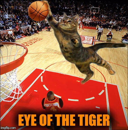 EYE OF THE TIGER | made w/ Imgflip meme maker
