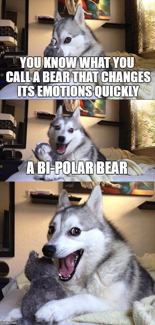 thank you drakkmain | YOU KNOW WHAT YOU CALL A BEAR THAT CHANGES ITS EMOTIONS QUICKLY A BI-POLAR BEAR | image tagged in memes,bad pun dog | made w/ Imgflip meme maker