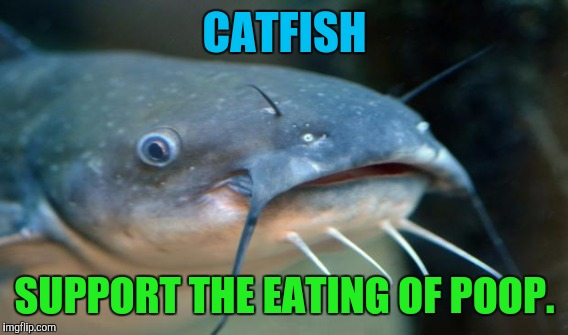 CATFISH SUPPORT THE EATING OF POOP. | made w/ Imgflip meme maker
