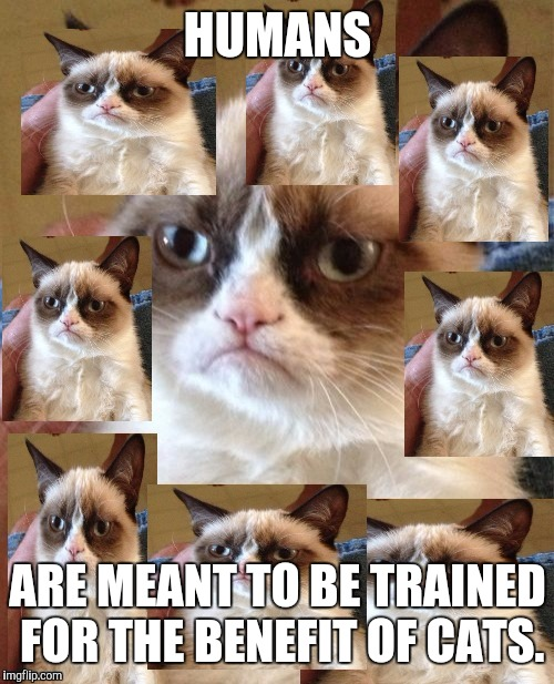 HUMANS ARE MEANT TO BE TRAINED FOR THE BENEFIT OF CATS. | made w/ Imgflip meme maker