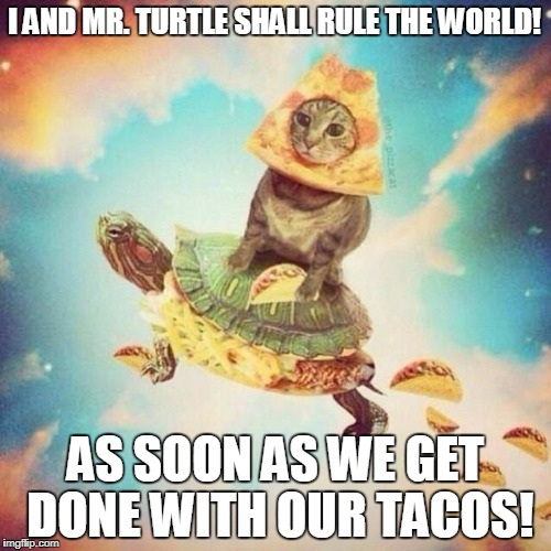 Rule The World! | I AND MR. TURTLE SHALL RULE THE WORLD! AS SOON AS WE GET DONE WITH OUR TACOS! | image tagged in space pizza cat turtle tacos | made w/ Imgflip meme maker
