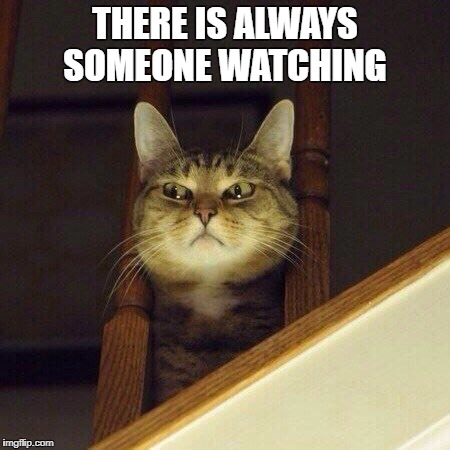 THERE IS ALWAYS SOMEONE WATCHING | image tagged in lurking cat | made w/ Imgflip meme maker