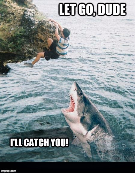 A late Shark week post | LET GO, DUDE I'LL CATCH YOU! | image tagged in sharks,shark week,raydog,discovery | made w/ Imgflip meme maker