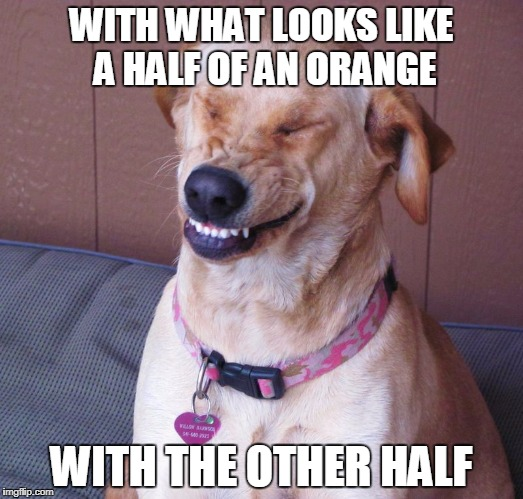 laughing dog | WITH WHAT LOOKS LIKE A HALF OF AN ORANGE WITH THE OTHER HALF | image tagged in laughing dog | made w/ Imgflip meme maker