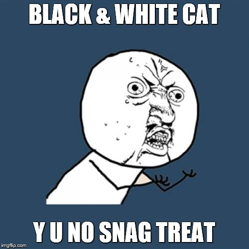 Y U No Meme | BLACK & WHITE CAT Y U NO SNAG TREAT | image tagged in memes,y u no | made w/ Imgflip meme maker