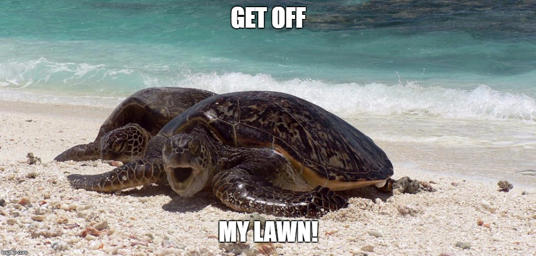 6 Ways You Can Protect Sea Turtles - Lawn furniture