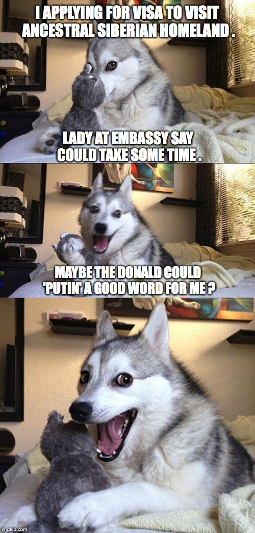 Bad Pun Dog Meme | I APPLYING FOR VISA TO VISIT ANCESTRAL SIBERIAN HOMELAND . MAYBE THE DONALD COULD 'PUTIN' A GOOD WORD FOR ME ? LADY AT EMBASSY SAY COULD TAK | image tagged in memes,bad pun dog | made w/ Imgflip meme maker