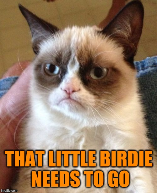 Grumpy Cat Meme | THAT LITTLE BIRDIE NEEDS TO GO | image tagged in memes,grumpy cat | made w/ Imgflip meme maker