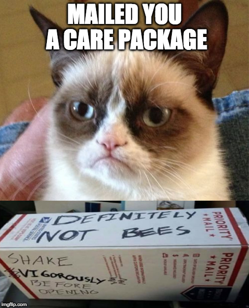 And I thought he didn't care! | MAILED YOU A CARE PACKAGE | image tagged in memes,grumpy cat,iwanttobebacon,iwanttobebaconcom,bees | made w/ Imgflip meme maker