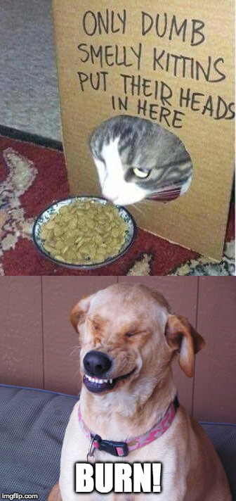 You're move cat....you're move. |  BURN! | image tagged in iwanttobebacon,iwanttobebaconcom,burn,cat,dog,dog vs cat | made w/ Imgflip meme maker
