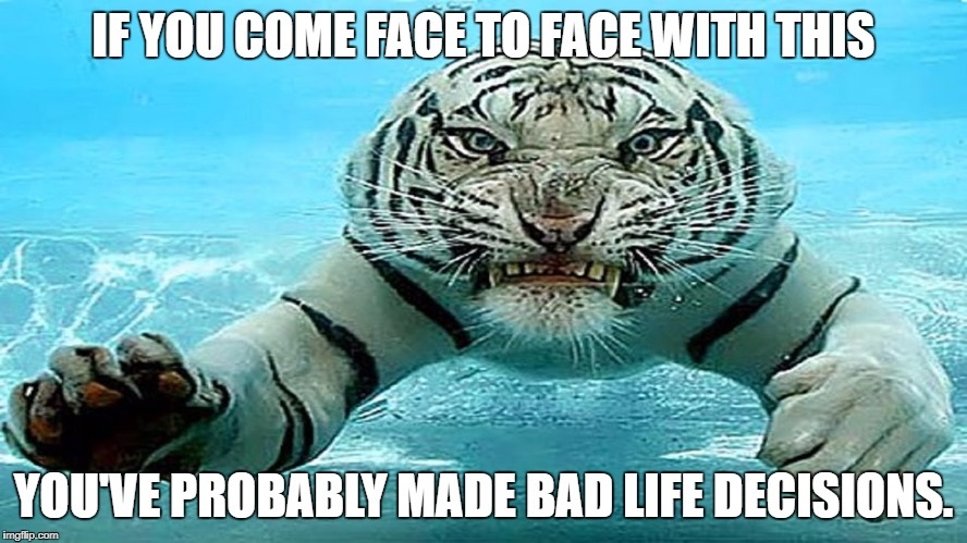 Bad life decisions lead to bad life consequences | IF YOU COME FACE TO FACE WITH THIS YOU'VE PROBABLY MADE BAD LIFE DECISIONS. | image tagged in consequences,decisions,life | made w/ Imgflip meme maker