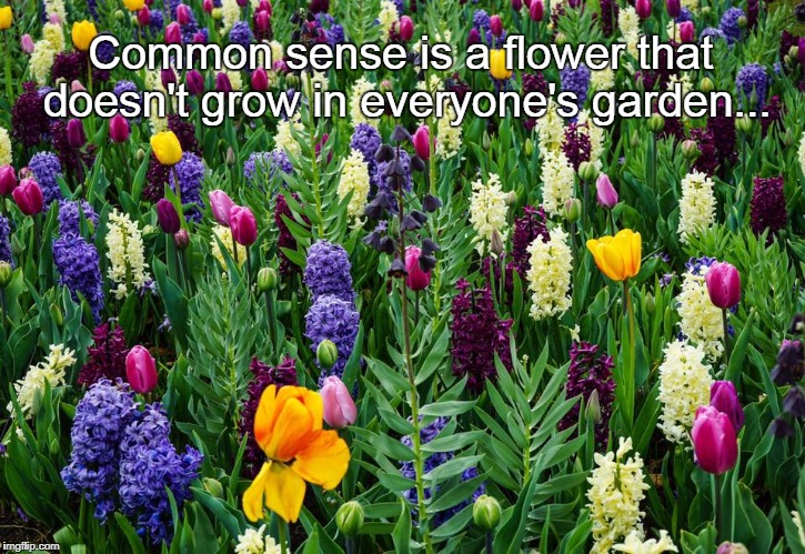 Common Sense... | Common sense is a flower that doesn't grow in everyone's garden... | image tagged in flower,garden,common sense,doesn't | made w/ Imgflip meme maker