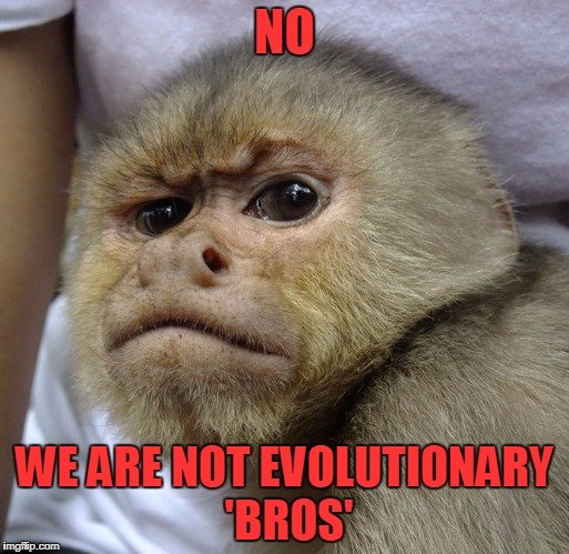 and I respectfully request you stop scratching your head and 'ooh'-ing in my presence |  NO; WE ARE NOT EVOLUTIONARY 'BROS' | image tagged in grumpy monkey,memes,evolution,monkey | made w/ Imgflip meme maker