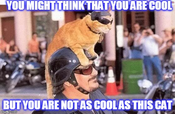 YOU MIGHT THINK THAT YOU ARE COOL BUT YOU ARE NOT AS COOL AS THIS CAT | image tagged in cool cat | made w/ Imgflip meme maker