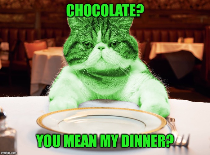 RayCat Hungry | CHOCOLATE? YOU MEAN MY DINNER? | image tagged in raycat hungry | made w/ Imgflip meme maker