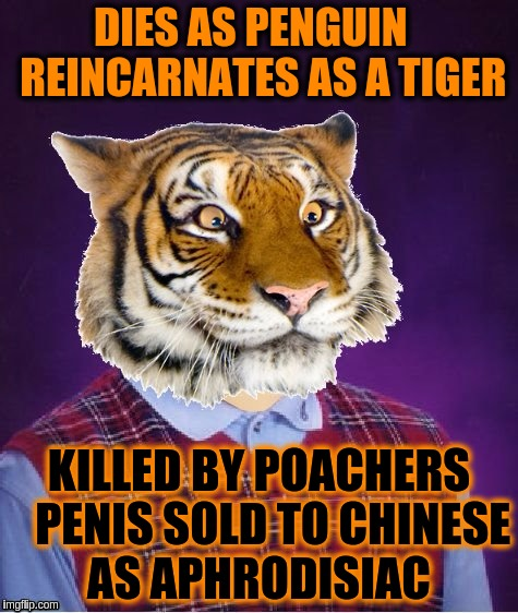 DIES AS PENGUIN   REINCARNATES AS A TIGER KILLED BY POACHERS   P**IS SOLD TO CHINESE AS APHRODISIAC | made w/ Imgflip meme maker