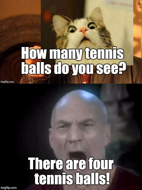 How many tennis balls do you see? There are four tennis balls! | made w/ Imgflip meme maker