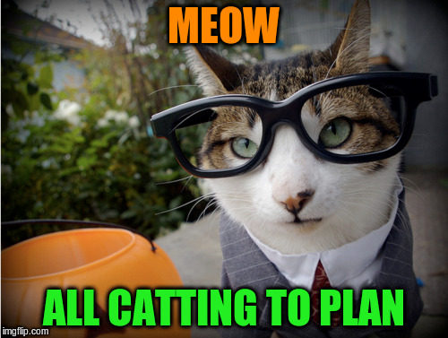 MEOW ALL CATTING TO PLAN | made w/ Imgflip meme maker
