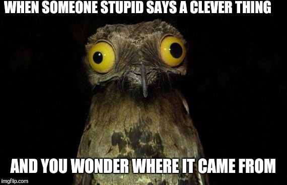 Weird Stuff I Do Potoo Meme | WHEN SOMEONE STUPID SAYS A CLEVER THING AND YOU WONDER WHERE IT CAME FROM | image tagged in memes,weird stuff i do potoo | made w/ Imgflip meme maker