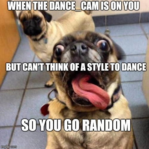 Crazy Dog | WHEN THE DANCE_CAM IS ON YOU BUT CAN'T THINK OF A STYLE TO DANCE SO YOU GO RANDOM | image tagged in crazy dog | made w/ Imgflip meme maker