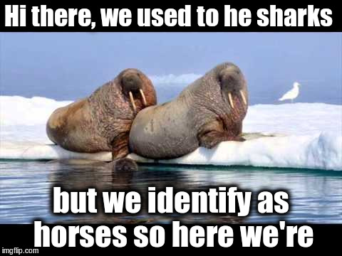Used to be sharks | Hi there, we used to he sharks but we identify as horses so here we're | image tagged in memes,funny,lgbt,gender identity,transgender,animals | made w/ Imgflip meme maker