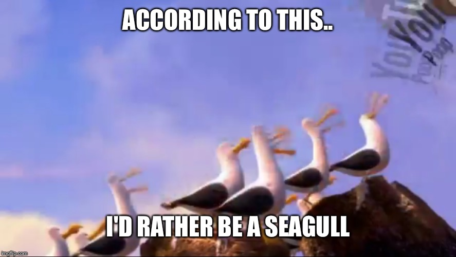 ACCORDING TO THIS.. I'D RATHER BE A SEAGULL | made w/ Imgflip meme maker