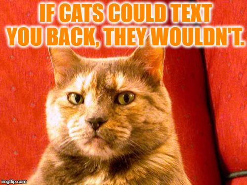 Suspicious Cat | IF CATS COULD TEXT YOU BACK, THEY WOULDN'T. | image tagged in memes,suspicious cat,cats,funny,funny memes,texting | made w/ Imgflip meme maker