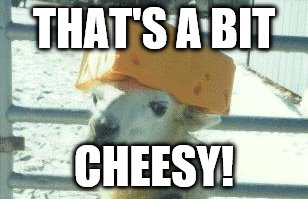 THAT'S A BIT CHEESY! | image tagged in llama cheese hat | made w/ Imgflip meme maker