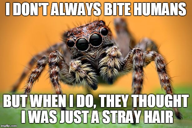 I DON'T ALWAYS BITE HUMANS BUT WHEN I DO, THEY THOUGHT I WAS JUST A STRAY HAIR | image tagged in spider | made w/ Imgflip meme maker
