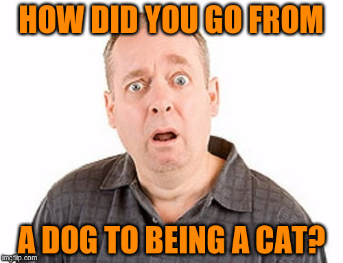 HOW DID YOU GO FROM A DOG TO BEING A CAT? | made w/ Imgflip meme maker