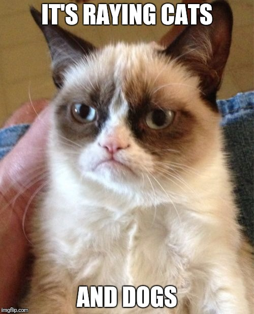 Grumpy Cat Meme | IT'S RAYING CATS AND DOGS | image tagged in memes,grumpy cat | made w/ Imgflip meme maker