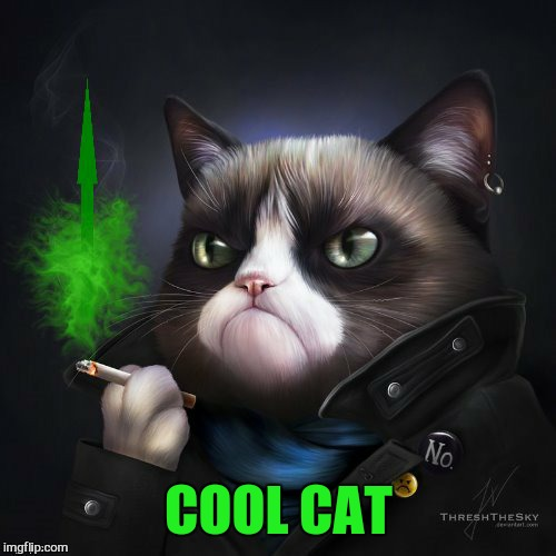 COOL CAT | made w/ Imgflip meme maker