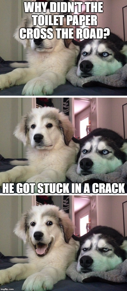 Bad pun dogs | WHY DIDN'T THE TOILET PAPER CROSS THE ROAD? HE GOT STUCK IN A CRACK | image tagged in bad pun dogs | made w/ Imgflip meme maker