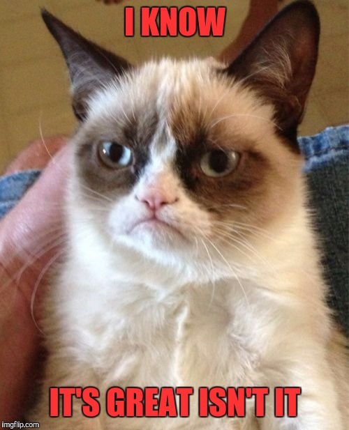 Grumpy Cat Meme | I KNOW IT'S GREAT ISN'T IT | image tagged in memes,grumpy cat | made w/ Imgflip meme maker