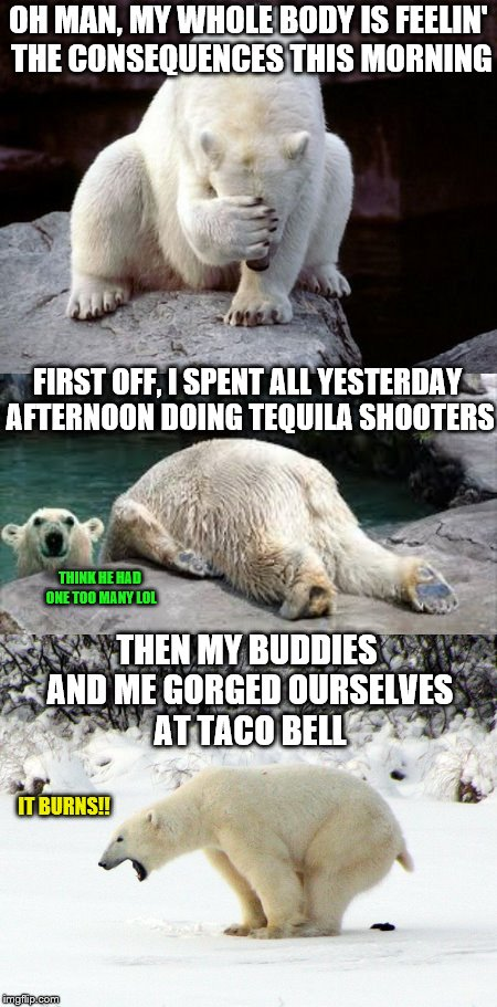 Regretful Polar Bear -- the College Years | OH MAN, MY WHOLE BODY IS FEELIN' THE CONSEQUENCES THIS MORNING FIRST OFF, I SPENT ALL YESTERDAY AFTERNOON DOING TEQUILA SHOOTERS THEN MY BUD | image tagged in memes,phunny,polar bear,animals,ursine substance abuse,funny | made w/ Imgflip meme maker