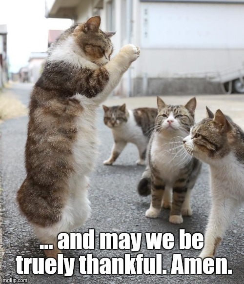 ... and may we be truely thankful. Amen. | image tagged in cat pastor | made w/ Imgflip meme maker