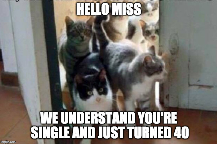 Meow. |  HELLO MISS; WE UNDERSTAND YOU'RE SINGLE AND JUST TURNED 40 | image tagged in herd of cats,crazy cat lady,iwanttobebacon,iwanttobebaconcom,40 | made w/ Imgflip meme maker