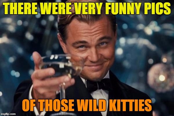 Leonardo Dicaprio Cheers Meme | THERE WERE VERY FUNNY PICS OF THOSE WILD KITTIES | image tagged in memes,leonardo dicaprio cheers | made w/ Imgflip meme maker