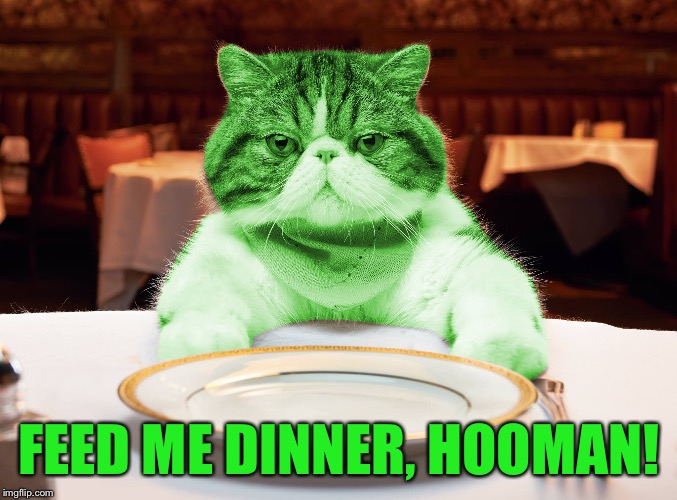 RayCat Hungry | FEED ME DINNER, HOOMAN! | image tagged in raycat hungry | made w/ Imgflip meme maker